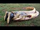 Видео подборка приколов - случай на рыбалке. Как поймать рыбу Русская рыбалка. Рыбалка с лодки.