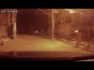 Лиса перебежала дорогу в городе Кострома ул Зеленая