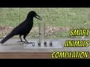 Smart Animals Compilation
