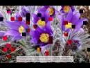 Весна Байсаков Марат