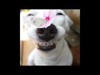 If you're having a shit day, just remember how happy this dog is)