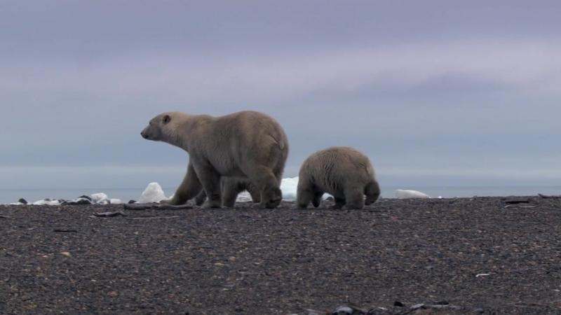 BBC Жизнь BBC Life 2009 BDRip 720p 3 серия Млекопитающие