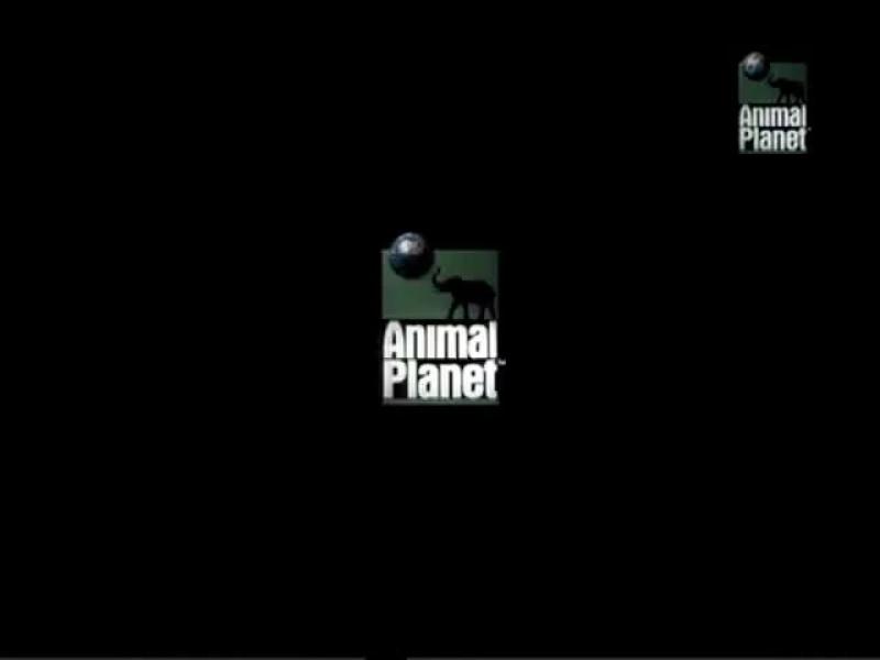 Дневник большой кошки |  Big Cat Diary. (сезон 1, серия 2) (1996)