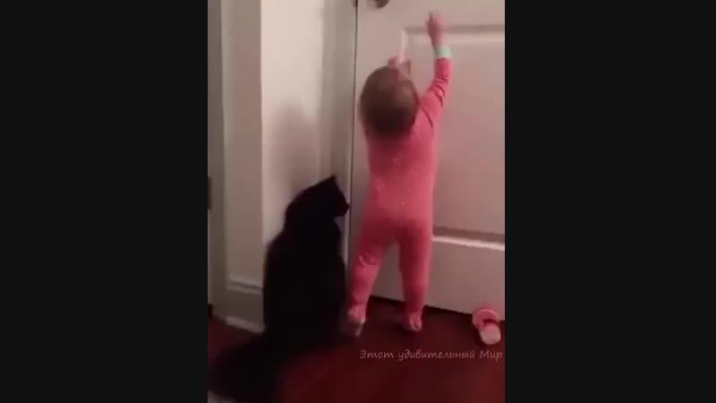 кот-помощник