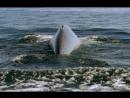 BBC Жизнь млекопитающих The Life of Mammals 2002 2003 07 Назад к воде