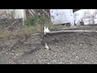 Чужих детей не бывает, или как кошка спасла щенка!!!