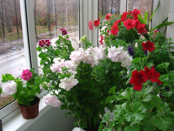 Удобрения для домашних цветов, изображение №3