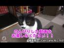 STORYTELLER情報 ストテラTV更新しました 昨年開催された幕張メッセ公演でのストテラメンバー賞 Nobと猫カフェの様子を公開
