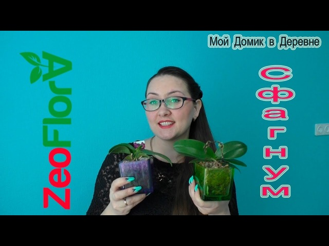 Мини фаленопсисы посадка в цеофлору или мох...Обзор состояния! (03.18)
