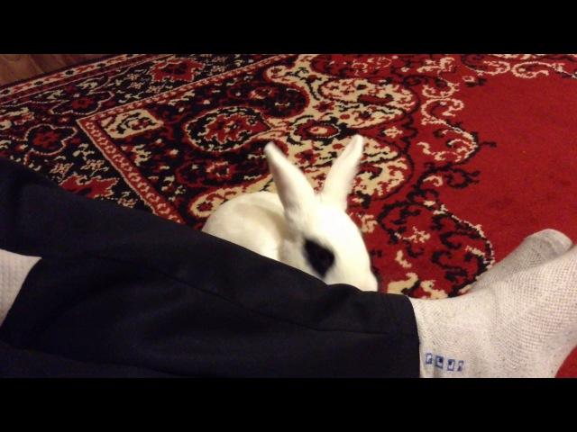 Прикол Кролик лижет ноги хозяину
