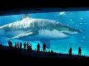 Il Grande Squalo Bianco - Documentari Animali Pericolosi ⏺