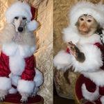 Шоу с дрессированными животными на Новогодние праздники.