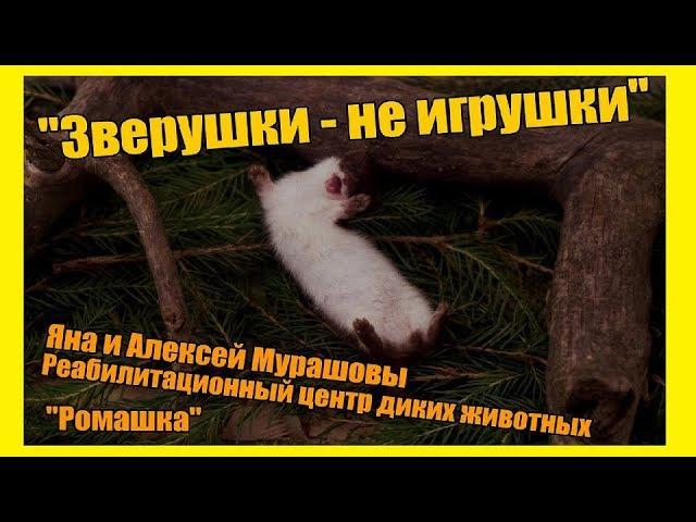 Жизнь замечательных людей: Алексей и Яна Мурашовы. Центр реабилитации диких животных Ромашка