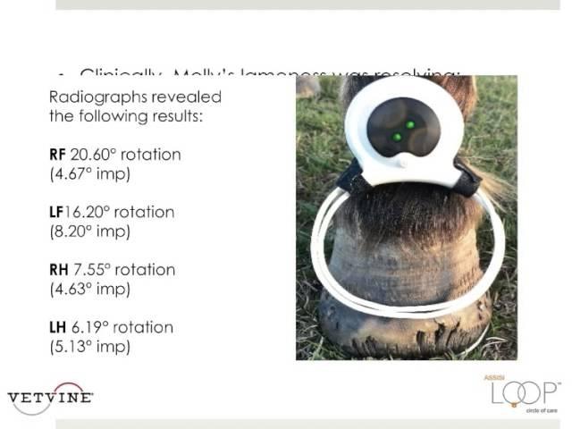 Лечение фаундера у лошади. Использование импульсной электромагнитной полевой терапии Treating Equine Founder - PEMF as a Therapeutic Modality