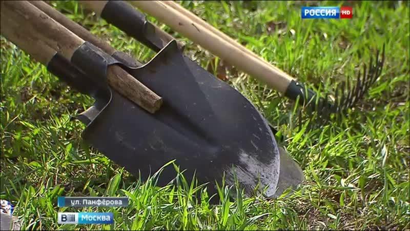Вести Москва В Москве проходит акция Миллион деревьев