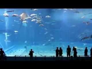 Японский океанариум.