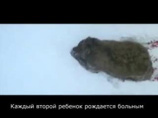 Английский фильм о России, запрещённый к показу в самой России!  Выживут ли Русские как нация, как вид