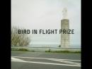 Жюри Bird in Flight Prize18