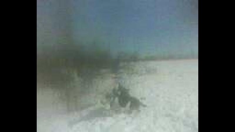 MOV0071A Грей отьелся гуляем вместе с Дашей в полях ПОСЛЕ СМЕРТИ ЛАКИ ОТ СЕРДЕЧНОГО ПРИСТУПА ТРАВЛИ СОБАК