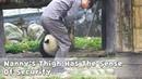 Nanny s Thigh Has The Sense Of Security iPanda