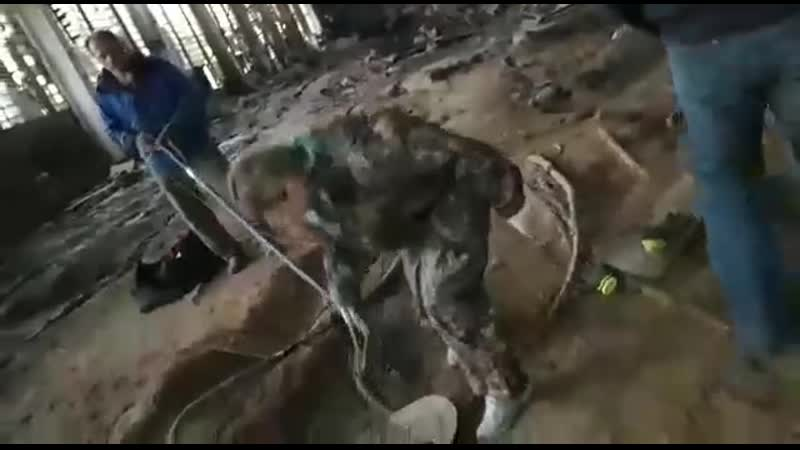 Спасение собаки из шахты