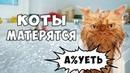 МАТЕРЯЩИЕСЯ КОТЫ