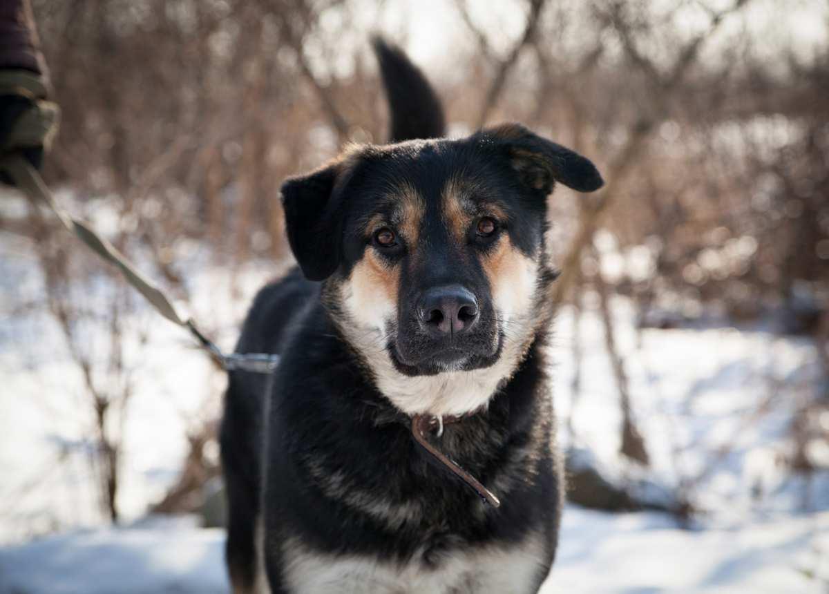 Афиша Екатеринбург Сбор макулатуры в помощь приютам для животных