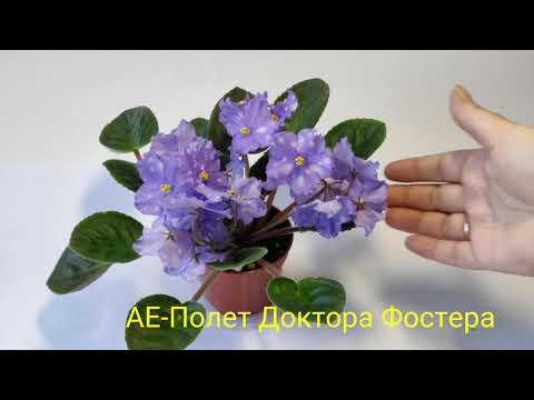 АЕ Cosmic Ice АЕ Мышинный Горошек АЕ Полёт Доктора Фостера АЕ Слава России