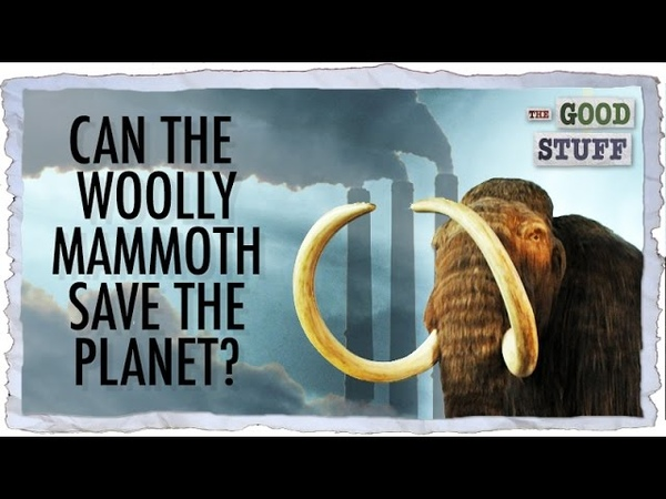 Can Bringing Back the Woolly Mammoth Save the Planet topnotchenglish