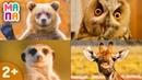 Как говорят животные / Развивающие мультики для самых маленьких / ВИКТОРИНА для детей от 1 / ЧАСТЬ 2