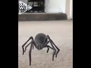 Oooh!! shit!! a spider dance!!  based on @lightskinmontes spider video