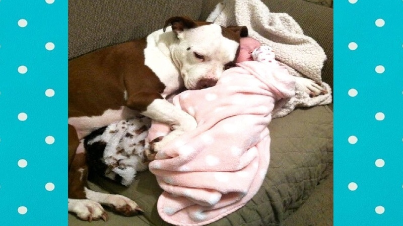 CUTE Dogs Protecting babies with love ★ Dog loves Baby videos
