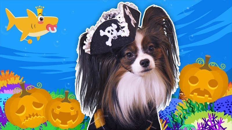 Halloween Baby Shark | Kids Songs and Nursery Rhymes | Halloween Songs from Yuki Lucky Dog