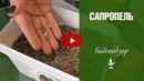 Цветы и рассада ✅ Использование сапропеля в качестве удобрения 🌟 Рецепты грунта для рассады