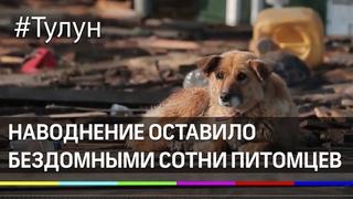 Как в Тулуне спасают животных. Наводнение под Иркутском оставило бездомными сотни питомцев