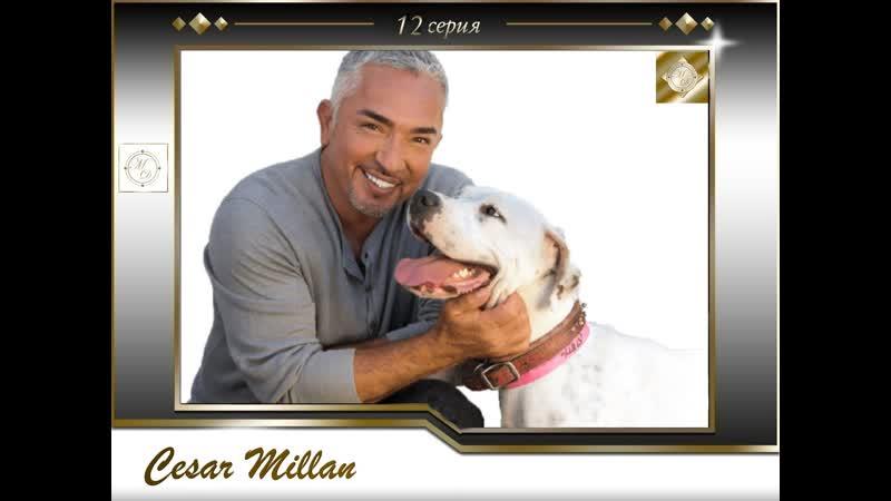12 серия Сезар Миллан Переводчик с собачьего Bella Jordan