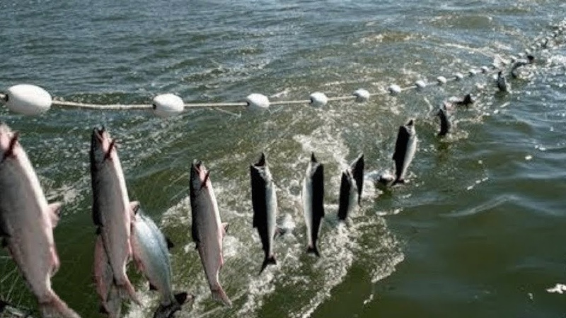 Everyone should watch this Fishermen's video Amazing Automatic Net Fishing Line Catching Big Fish