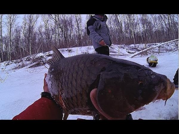 ЧУТЬ РУКИ НЕ ОТОРВАЛО! САЗАНЯРА ПРЕТ КАК ТАНК Рыбалка ! Первый лед!