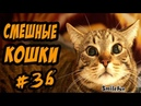 Смешные Кошки 2017 Приколы про котов и кошек