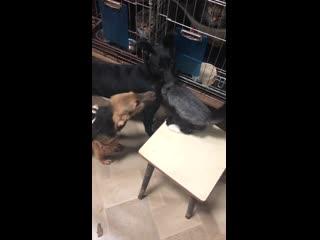 Как собаки дружат с кошками: милое видео из пензенского приюта для животных