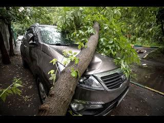 Кто должен отвечать, если на машину упало дерево