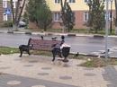 Дмитрий Беднягин фотография #30