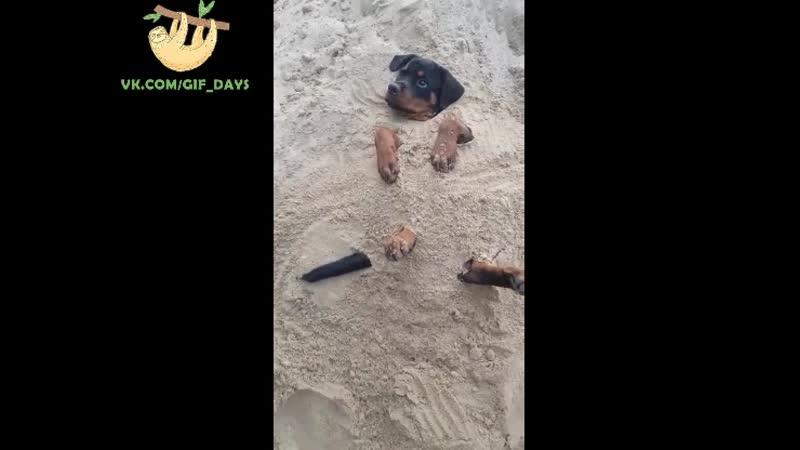 Пляжник 🙃