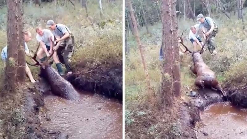 Deer Gets Rescued From Swamp