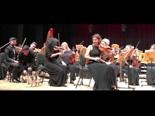 В Стамбуле кошка вышла на сцену во время выступления оркестра