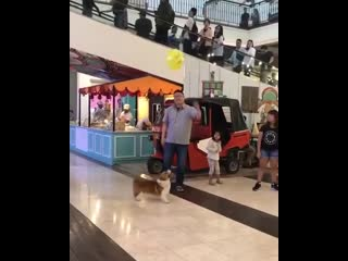 I love how every human there just gently ensures the doggo can keep playing