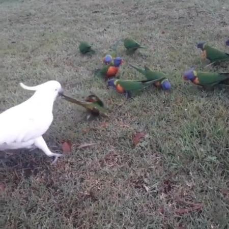 Featuring Standout Bird Pics on Instagram 'Jerkbird Thanks Lucy Julia for sharing this video your best birds bestbirdshots best birds