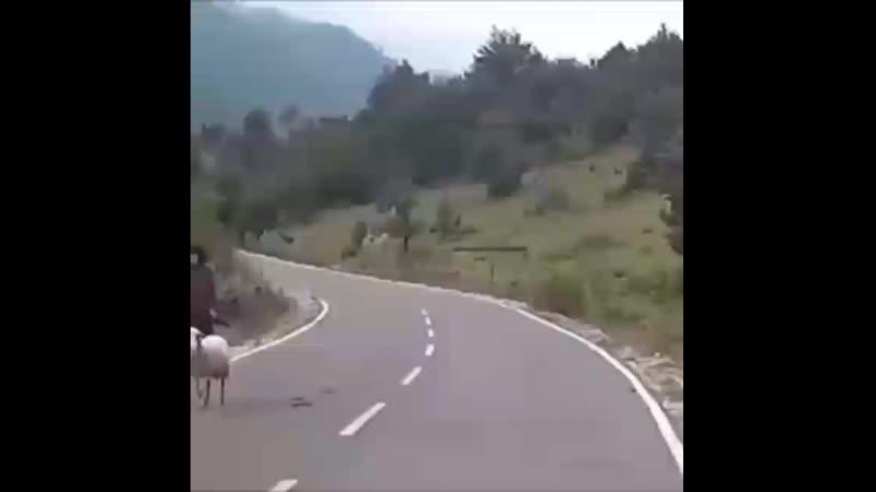 Құрбан айт