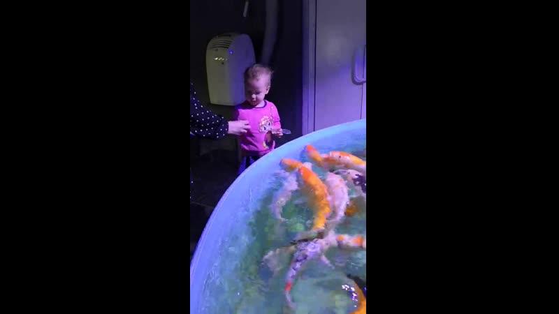 Вероника кормит рыбок 2г1м
