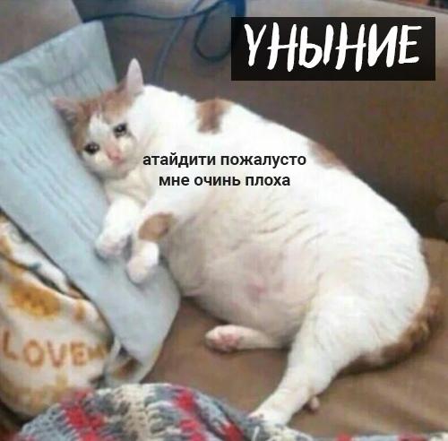 7 кошачьих грехов